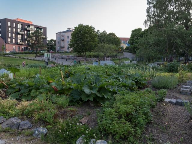 Hermannin viljelijöiden puutarhaviljelmät Hermanninpuistossa